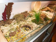 Beautiful hamster home. Animals deserve pretty rooms too. Hamster Habitat, Hamster Care, Baby Hamster, Hamster Stuff, Pet Stuff, Hamsters As Pets, Cute Hamsters, Cat Grass, Cute Animals