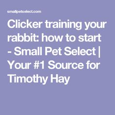 Clicker training your rabbit: how to start - Small Pet Select | Your #1 Source for Timothy Hay