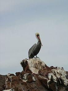 El Vizcaíno, Baja