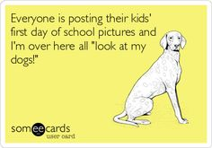 Everyone is posting their kids' first day of school pictures and I'm over here all 'look at my dogs!'