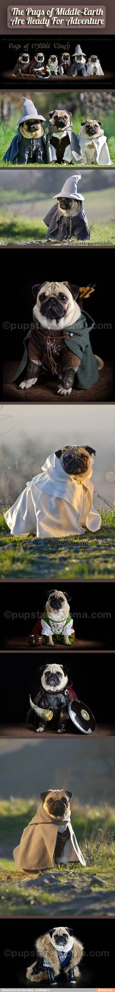 The Pugs of Middle Earth!