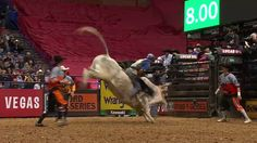 EVENT CHAMPION Kaique Pacheco rides Lester Gillis for 88.25 points - Published on Feb 26, 2017  EVENT CHAMPION Kaique Pacheco rides Lester Gillis for 88.25 points in Round 4 of the 2017 PBR Built Ford Tough Series in St. Louis, MO. Note: Pacheco is the only one to ride his bull this championship and wins. And, he breaks the bull's unridden streak.