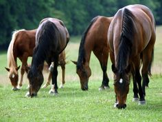 One of these plants is poisonous to horses-which one?