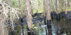 Cold Lake spills have been ongoing for four months according to new documents.