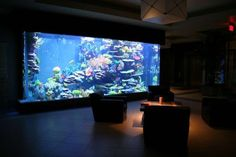 All Time Top 10 Saltwater Fish Tanks