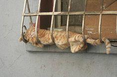 猫ストレッチ、柔軟な猫によるドリーミングな猫寝姿24体位 : カラパイア