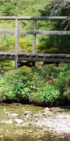Bach und kleine Brücke im Wald Outdoor Decor, Home Decor, Woodland Forest, Nature, Homemade Home Decor, Interior Design, Home Interiors, Decoration Home, Home Decoration