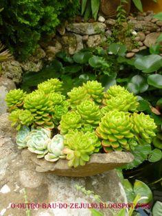 """Suculentas plantadas em vaso de pedra. Jardim da """"Casa Catita"""", Algarve-Portugal"""