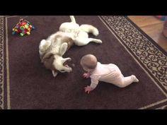 Милая игра: собака учит малыша жизни (видео)   nakonu.com