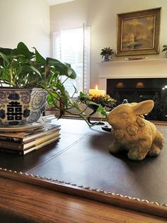 Lily Pads and a Bunny Rabbit - Back Porch Musings