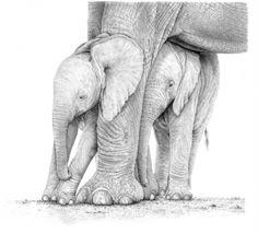 Animals Wildlife Prints Pencil  22 different ones Artist: Stephen Mead Artwork title: Pencil Price: $145