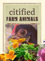 Urban Homestead - family friendly city farm. Organic Gardening; Water & Waste, Alternative Energy; Self-sufficiency, Citified FArm Animals...