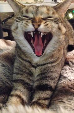 my kitty - laughing out loud