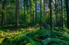 Beautiful forests of the world | loveexploring.com Beautiful Forest, Top Destinations, Black Forest, Evergreen, Photo Editing, Royalty Free Stock Photos, Germany, Country Roads, World