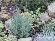 szaporítás bujtással Plants, Lavender, Planters, Plant, Planting