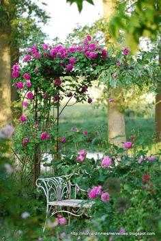 Mon Jardin Mes Merveilles: One shot : Mme Isaac Pereire