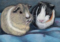 Guinea Pig Watercolor Original 5x7 SFA ART Mixed Media Cavy Goeben  #Realism  #aceo #art #eBay #guineapigs