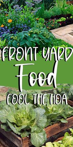 Farm Gardens, Small Gardens, Outdoor Gardens, Home Vegetable Garden, Fruit Garden, Small Space Gardening, Garden Spaces, Gardening For Beginners, Gardening Hacks