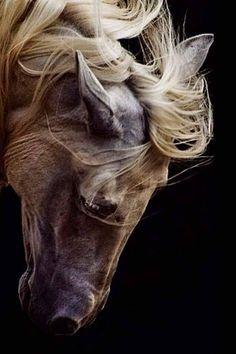 Horse love, white horses, horse drawings, most beautiful animals, beautiful Horse Bow, Horse Shirt, Man Horse, Horse Photos, Horse Pictures, Most Beautiful Animals, Beautiful Creatures, Equine Photography, Animal Photography