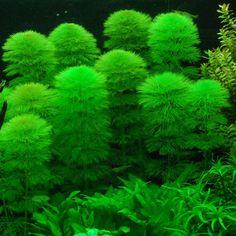 26cm Height Scucs Aquarium Plants Green Decorative Aquarium Plants D/écor Artificial Underwater Grass Plant Plastic Fake Terrarium Plants Fish Tank Aqua Landscape Ornament