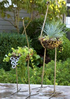These ostrich sculptures come alive when filled with succulents and small plants. Each is handmade in Kenya from washers, nuts, and other salvaged metal pieces. #ostriches