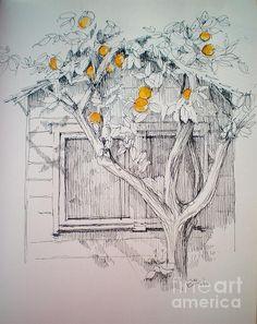 the orange tree  by Dominique Eichi