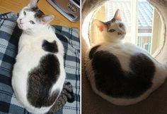 Katten met merkwaardige tekeningen - Plazilla.com