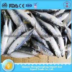 Chilled Frozen Pacific Mackerel Whole Round Fish Catch By Trawl