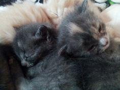 My gray girls