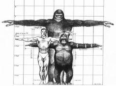 Read Bigfoot from the story Mythological Creatures by Emberzash (Rachel) with reads. Sasquatch, or better known as Bigfoot. Yeti Bigfoot, Bigfoot Sasquatch, King Kong, Mythological Creatures, Mythical Creatures, Bigfoot Stories, Finding Bigfoot, Bigfoot Sightings, Humanoid Creatures