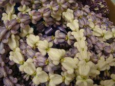 purple and white single crown flower lei Lavender Flowers, Fresh Flowers, Blue Flowers, Flower Lei, Flower Crown, Graduation Leis, Graduation Photos, Hawaiian Flowers, Hawaiian Leis