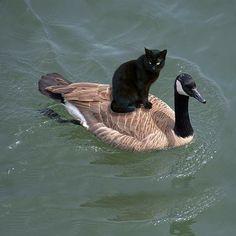 NA Genie/ßen Sie das Leben Liebe meine s/ü/ße Katze Mode Neuheit Over-The-Calf Crew Socken . schwarz