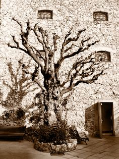 The tree at the Dalie Theatre Museum in Figueres.