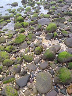 ◝◜ ོ︠ i hear sᴱᴬgulls calling◝◜ ོ︠ ◝◜ Green Beach, Sea Photography, Beach Rocks, Treasure Island, Beach Cottages, Textures Patterns, Pink And Gold, Seaside, Coastal