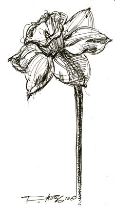 Oh! I need a daffodil, iris, and daisy. Sketched like this. No black.
