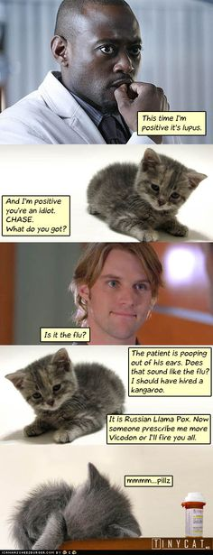 Dr Tinycat... this made me laugh so hard... 'The patient is pooping out of his ears.' too funny