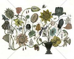 Bouquet - Tapetit / tapetti - Photowall