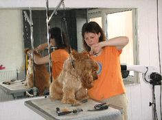 Dog Grooming Business, Animal, pet services in , Orange Beach