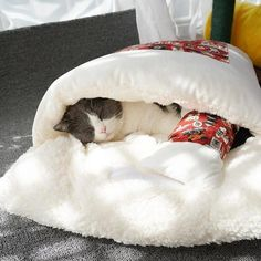 Animals And Pets, Baby Animals, Nurse Cat, Cat Body, Warm Bed, Kittens, Cats, Diy Stuffed Animals, Pet Beds