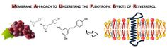 Global Medical Discovery features paper: Resveratrol induces ordered domains formation in biomembranes: Implication for its pleiotropic action