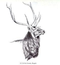 1961 Original ELK DEER drawing Print Quebec by MushkaVintage3