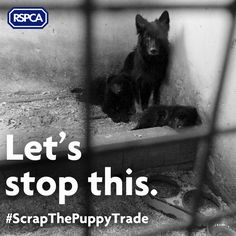 THANK YOU to the 70,000 people who have signed our petition to #ScrapThePuppyTrade! If you haven't already, please add your voice and help us reach 100k.
