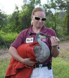 Bonnie Young, Tampa's Lowry Park Zoo zookeeper, holds the rescued crane )(rescued in March) prior to release. April, 2012 #FWC photo