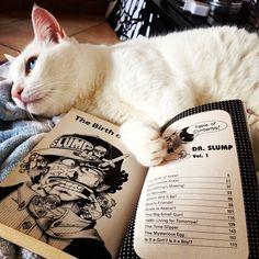 A break from reading   #cat #cute #book