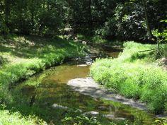 Turkey Branch near Rockville, Maryland. I used to catch snakes along this creek.