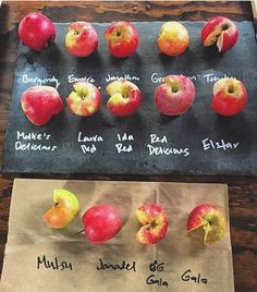 Visit the #AvilaValley and pick your own #apples! : @koops_recipes