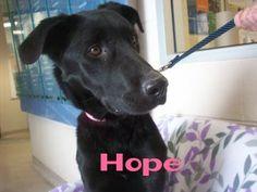 Dogs For Adoption In Hamilton Burligton Ontario