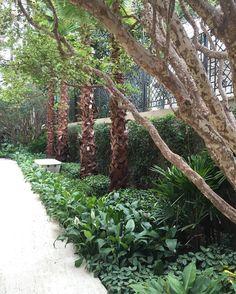 The secret garden  #paisagismobyhanazaki  #alexhanazaki #hanazaki #paisagismo #arquitetopaisagista #jardins #flor #flores #jardim #natureza #paisagista #landscapearchitect #gardening #landscapedesign #garden #flower #landscapearchitecture #garten #giardino #jardin