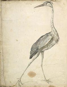 Jean-Baptiste Oudry (1686-1755), Avian Album: Crane, Watercolor and black ink | Harvard Art Museums