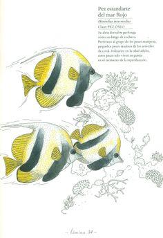 Ilustración de Emmanuelle Tchoukriel para la obra Inventario ilustrado de los mares, de Virginie Aladjidi y Emmanuelle Tchoukriel.
